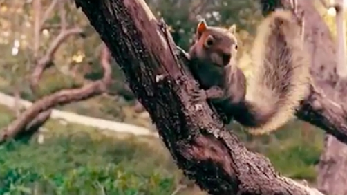 'Squirrels' Trailer Features… Killer Squirrels?!?